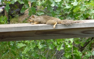 squirrell 001